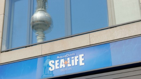 Image 3: Berlin attraction Sea Life and reflection of the television tower in a window of DomAquarée.